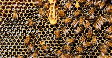beehive-337695_1280